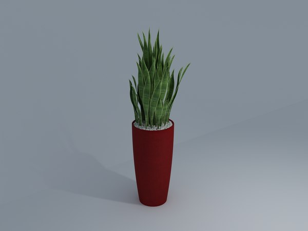 abram bush 3D