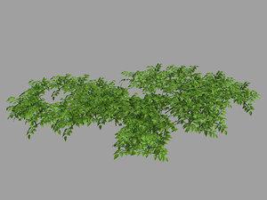 3D plants - mixed flowers
