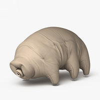 3D tardigrade model