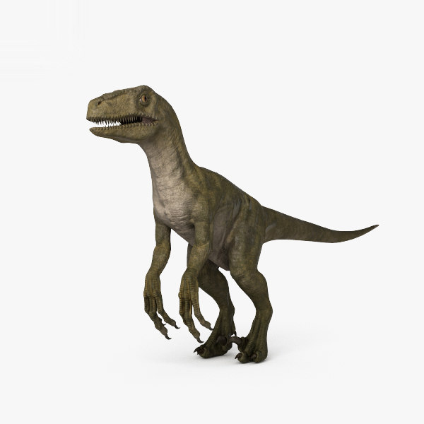 3D velociraptor dinosaurs animal model