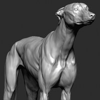 3D greyhound dog vfx zbrush model