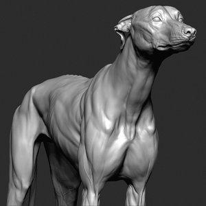 3D greyhound dog vfx zbrush model