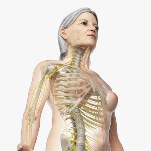 3D skin elder female skeleton