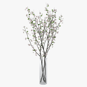 branches cherry blossoms 3D model