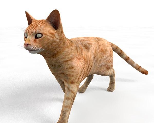 3D rigged cat model