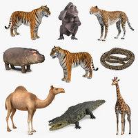 african animals 6 3D