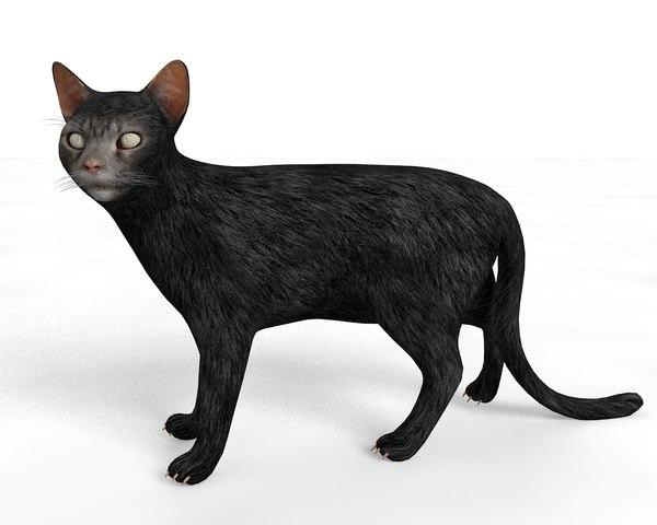 rigged cat 3D
