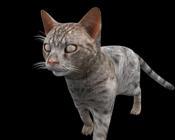 rigged cat 3D model