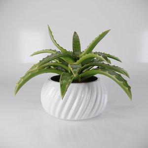 succulent aloe vera flower pot 3D