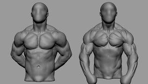 3D male torso studies model