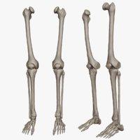Human Leg Bones(High Poly Model)