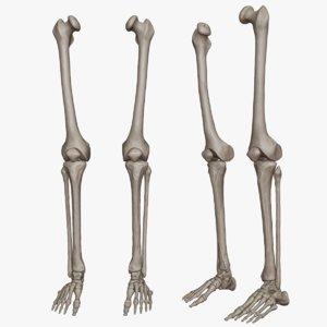 lower limb science anatomy 3D model