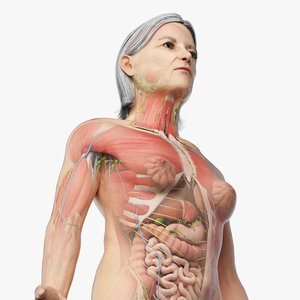 3D model elder female anatomy