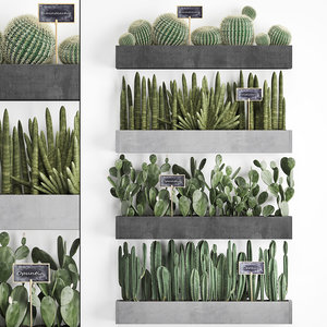 3D plants cactus wall decor