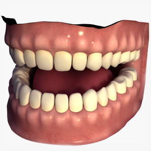 human mouth 3D model