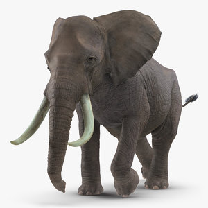 3D model elephant running animal fur