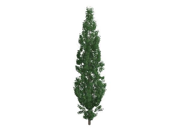 3D model cupressus tree