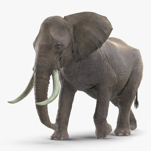 3D african elephant walking animal model