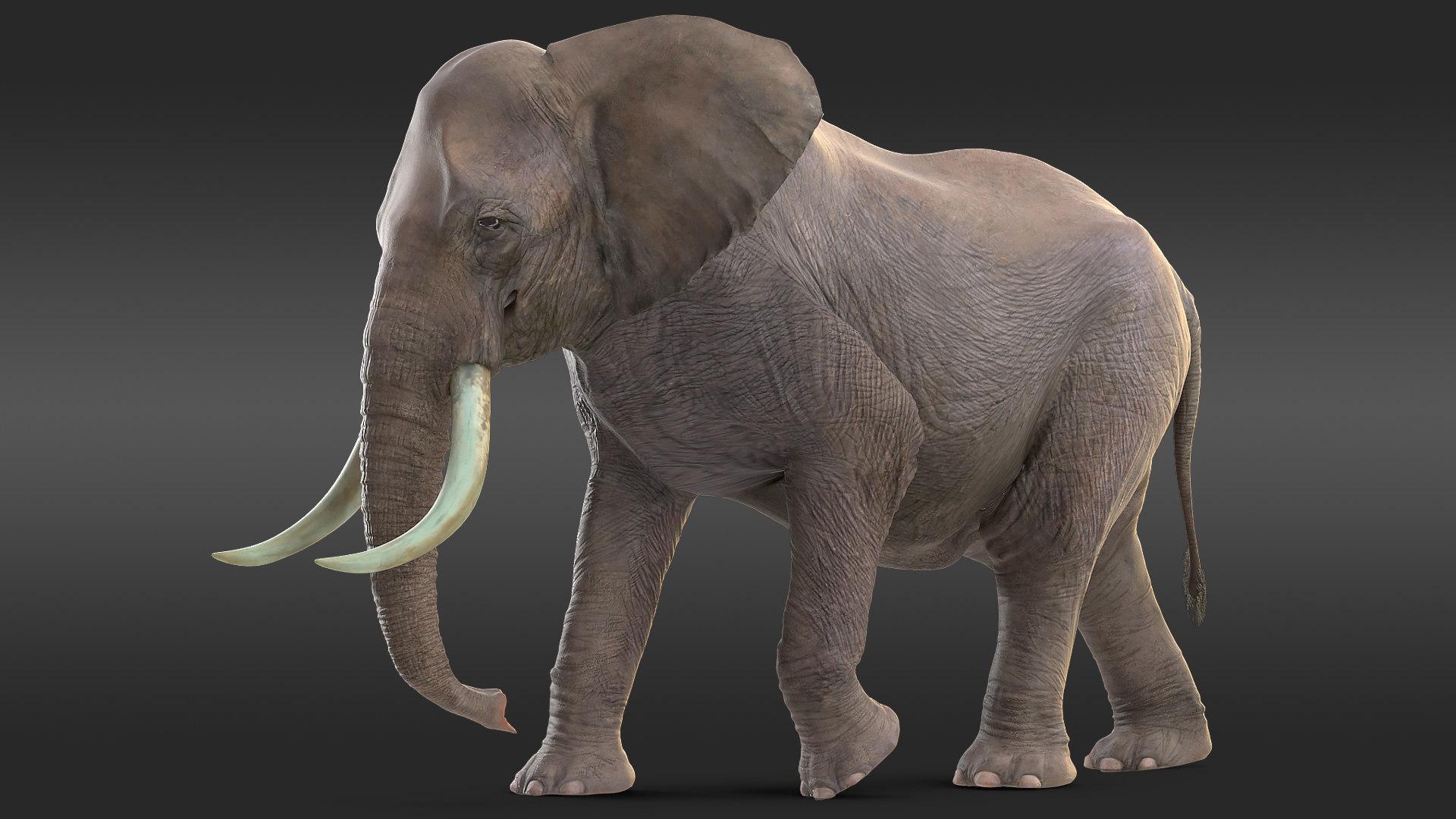 3D african elephant walking animal model - TurboSquid 1451500