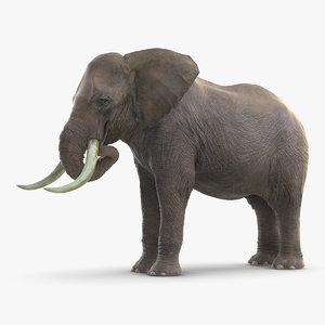 elephant eating mammal animal 3D model