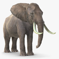 elephant waiting animal fur model