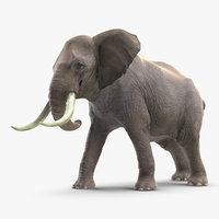 3D elephant agressive animal fur
