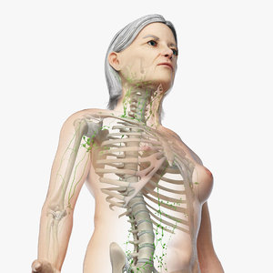 3D model skin elder female skeleton