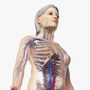 3D model skin elder female skeleton