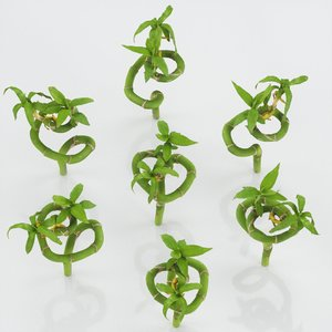 ribbon dracaena 3D