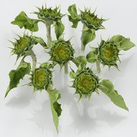 flower young sunflower 3D model