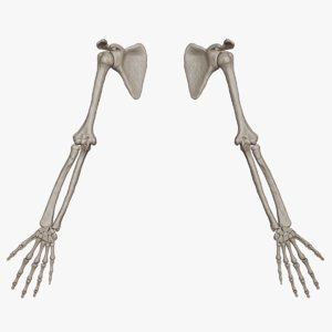 3D skeletal arm science anatomy bone