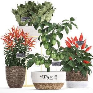 3D model decorative plants kitchen pepper