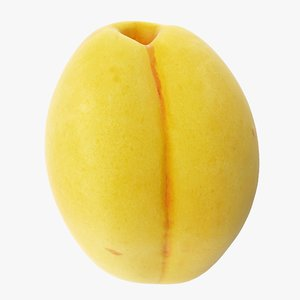 3D apricot 01 model