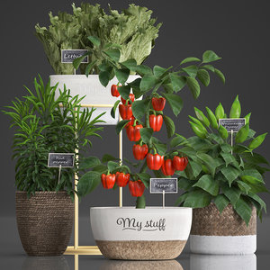 decorative plants kitchen pepper model
