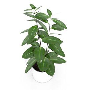 3D model ficus plant pot