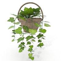 Ivy plant pot