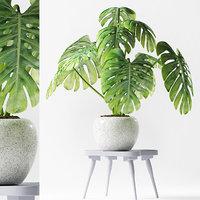 plants 190 3D model