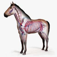 skin horse skeleton 3D model