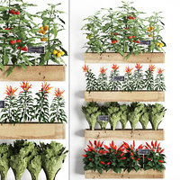 Decorative plants for the kitchen on wooden box 45