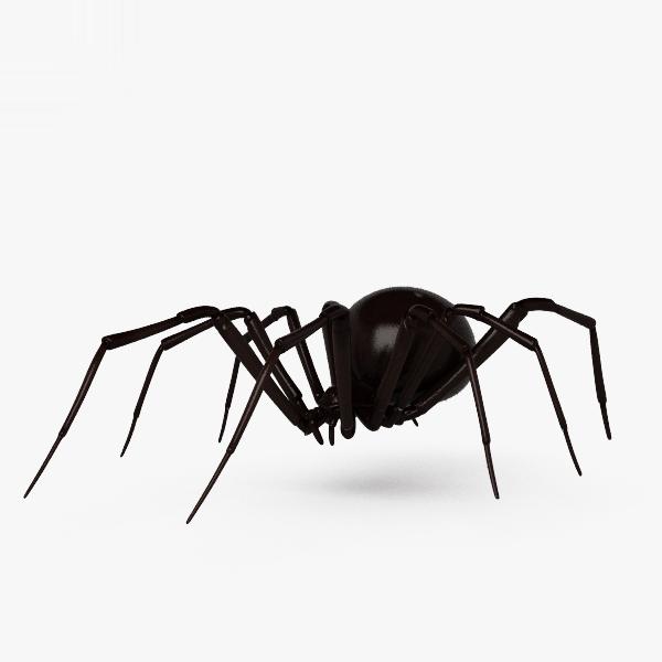 black widow spider 3D model