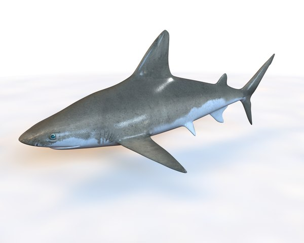 3D sandbar sand shark