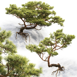 pines rocks 3D