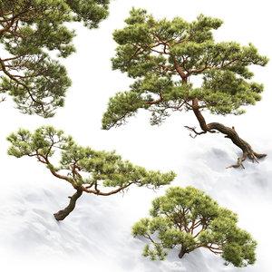 pines rocks 3D model