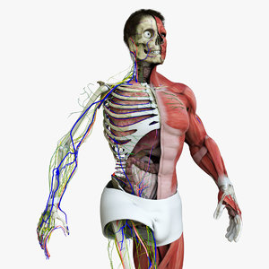 motion capture male anatomy 3D model