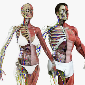 motion capture anatomy combo 3D model