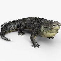 3D alligator animations model