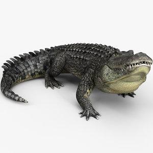 3D alligator animations model