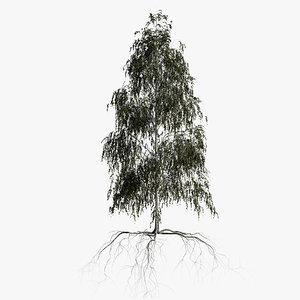 birch summer 3 3D