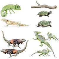 3D terrarium reptile lizard model