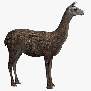 llama lama 3D model